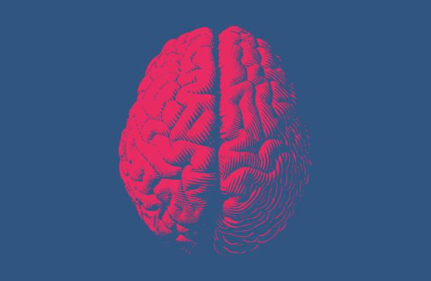 ilustraciones, imágenes clip art, dibujos animados e iconos de stock de dibujo estilo vintage cerebro monocromo - brain