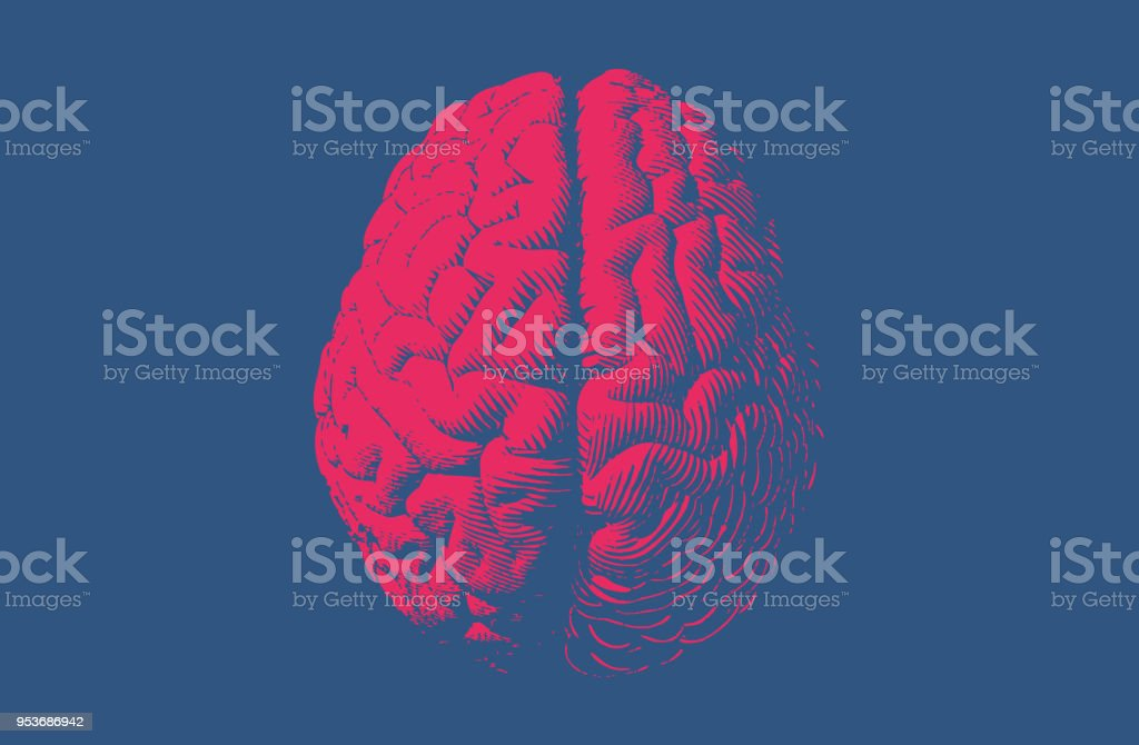 Monochrome drawing brain vintage style vector art illustration