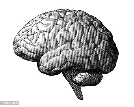Monochrome engraving brain illustration in side view isolated on white background