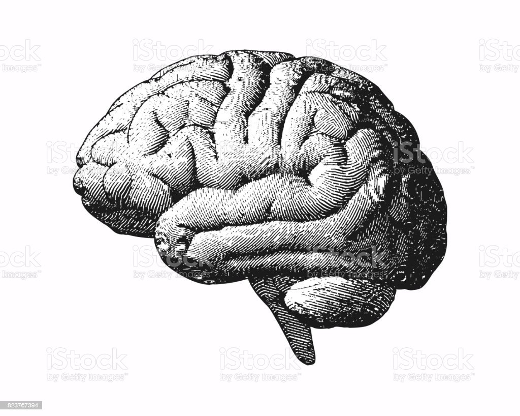 Monochrome engraving brain illustration on white BG vector art illustration