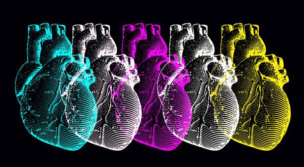 Illustration du coeur humain gravure monochrome - Illustration vectorielle