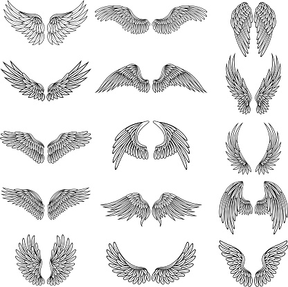 Monochrome illustrations set of different stylized wings for logos or labels design projects. Vector pictures set