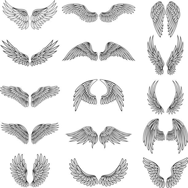 monochrome illustrations set of different stylized wings for logos or labels design projects. vector pictures set - eagle character stock illustrations, clip art, cartoons, & icons