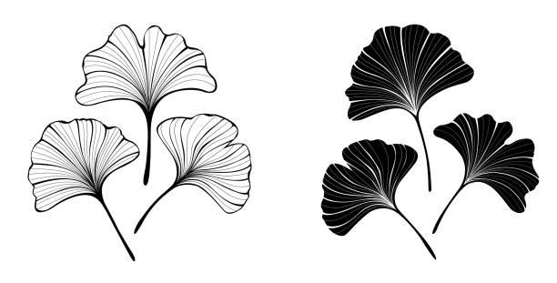 Monochrome leaves of ginko biloba Set of monochrome, black, contour, stylized, isolated leaves of ginkgo biloba on white background. ginkgo stock illustrations