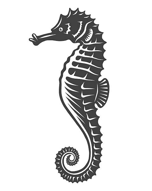 Monochrome sea horse icon Monochrome sea horse icon isolated on white background sea horse stock illustrations