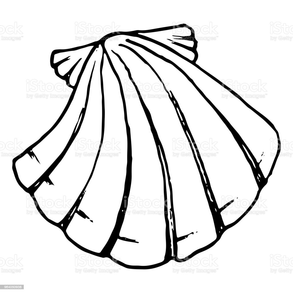 Monochrome sea shell sketched line art vector - Royalty-free Abstract stock vector