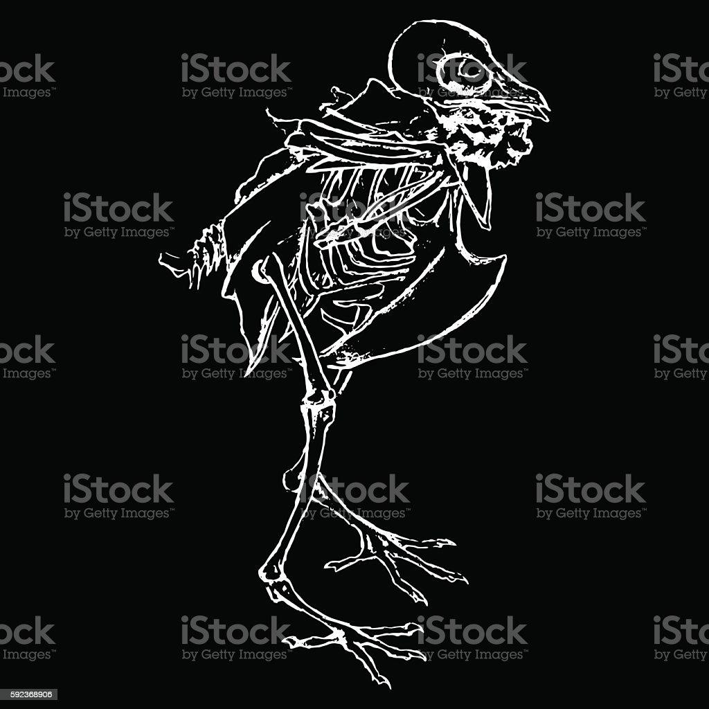 Monochrome skeleton of pigeon dove bird sketch vector vector art illustration