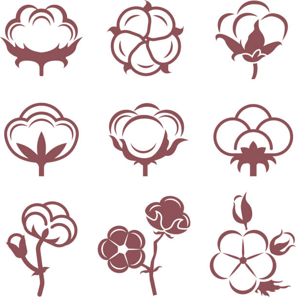 bildbanksillustrationer, clip art samt tecknat material och ikoner med svartvita stiliserade bilder uppsättning vit bomull blommor. vektor illustrationer set - cotton growing