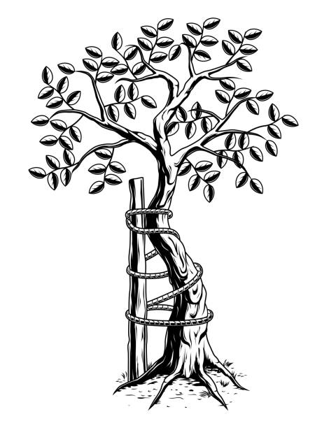 ilustrações, clipart, desenhos animados e ícones de árvore monocromática de andry - ortopedia