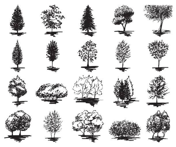 monochrome baum silhouette skizzierte linie kunst set isoliert vektor - stauden stock-grafiken, -clipart, -cartoons und -symbole