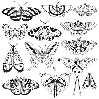 Monochrome Tropic Butterflies Silhouettes