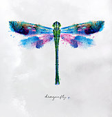 Monotype vivid colorful dragonfly drawing with different colors on paper background