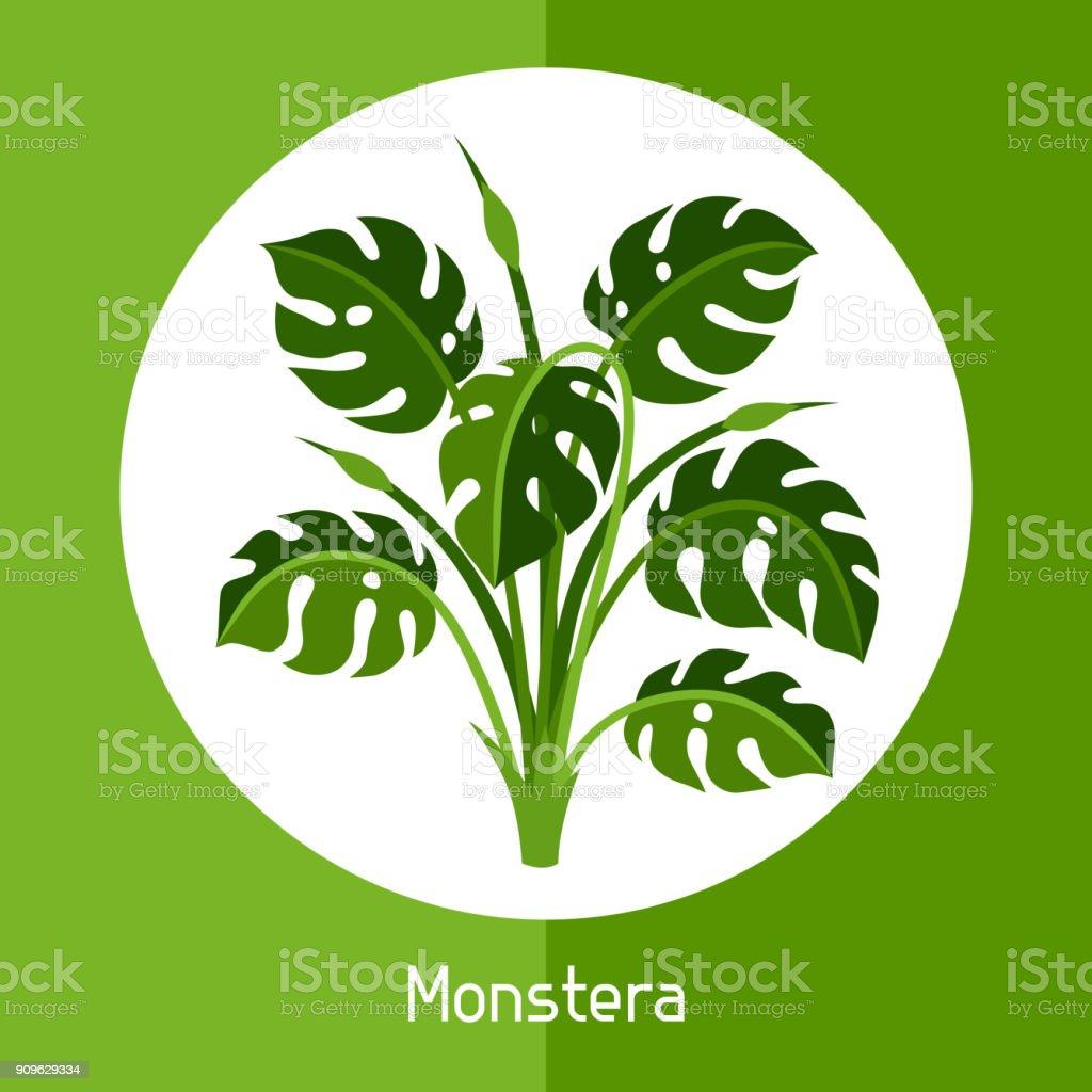 Monstera. Ilustración de plantas tropicales exóticas o bush - ilustración de arte vectorial
