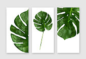 Tropical palm leaf close up. Monstera leaf isolated on white background, summertime banners set, front, top view.