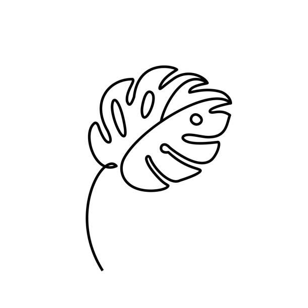 ilustrações, clipart, desenhos animados e ícones de monstera folha estilo de linha mínima. uma linha contínua que desenha a palma tropical do vetor abstrato isolada em um fundo branco. molde do logotipo, conceito da beleza, cópia do t-shirt, cartão, poster - monstera
