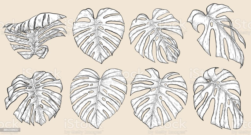 Monstera leaf sketch by hand drawing royalty-free monstera leaf sketch by hand drawing stock vector art & more images of art