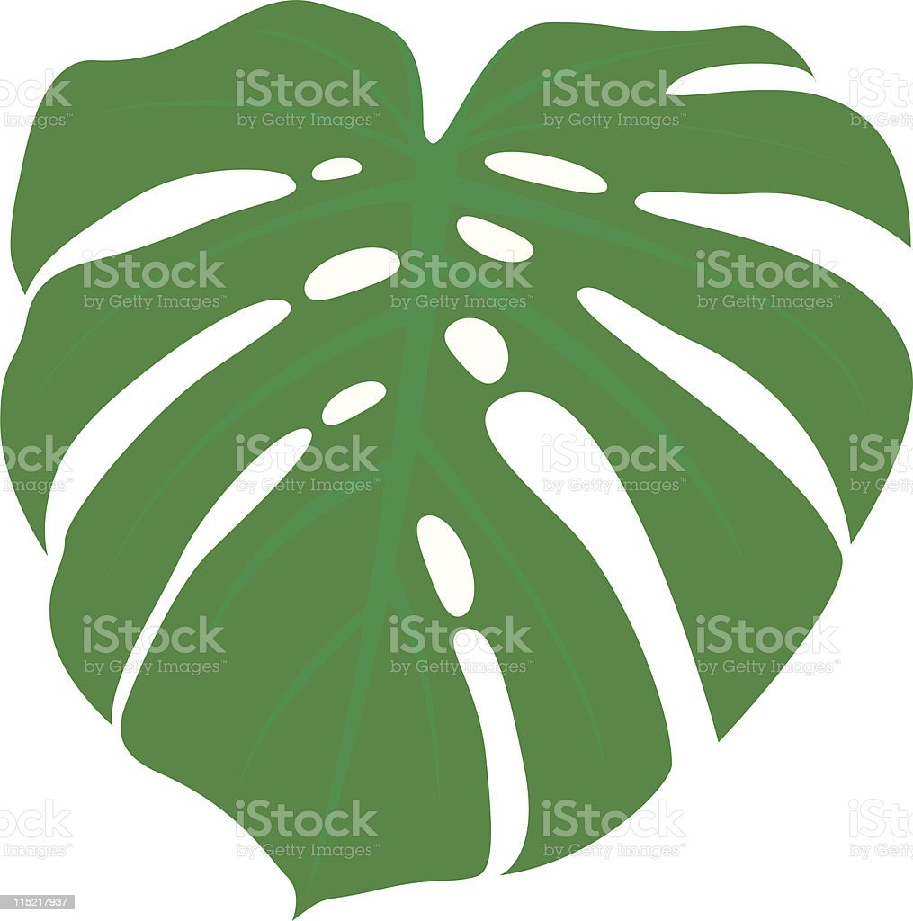 Monstera Leaf royalty-free monstera leaf stock vector art & more images of cheese plant