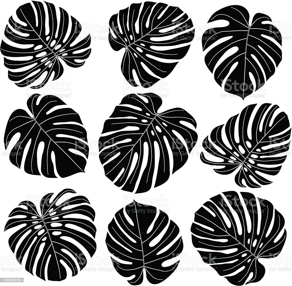 Monstera Leaves In Black And White Stock Vector Art & More ...
