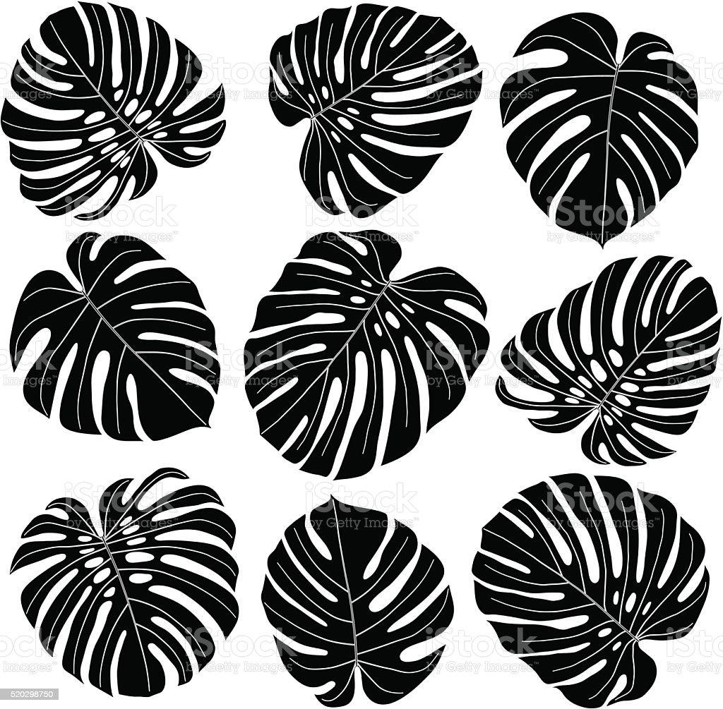 Monstera hojas en negro y blanco - ilustración de arte vectorial