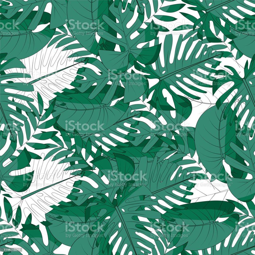 Monstera Palmiye Yapraklari Philodendron Yaprak Iskeletleri Ve Tam