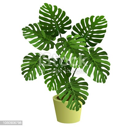 Monstera plant in pot. Hand drawn vector illustration on white background.