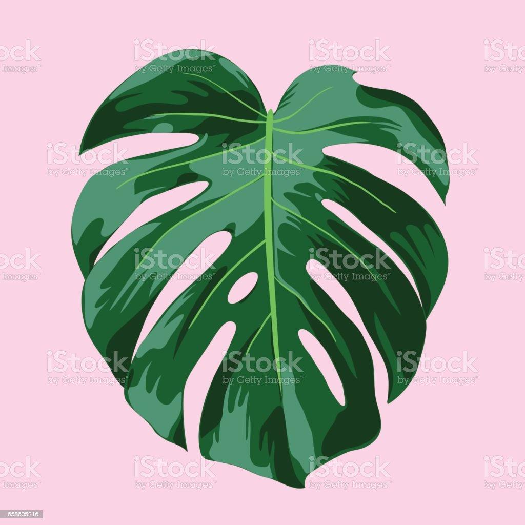 Ilustración de hojas de Monstera Tropical - ilustración de arte vectorial