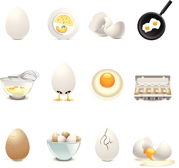 montage of egg related illustrations - egg stock illustrations