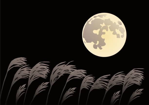 illustrazioni stock, clip art, cartoni animati e icone di tendenza di moon and susuki(japanese pampas grass) - miscanthus sinensis