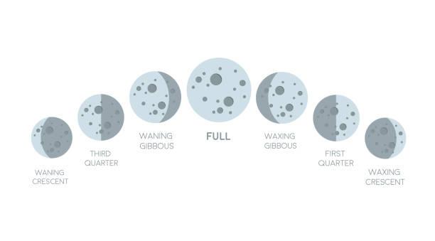 illustrazioni stock, clip art, cartoni animati e icone di tendenza di icona delle fasi lunari in stile piatto isolato su sfondo bianco. - luna gibbosa