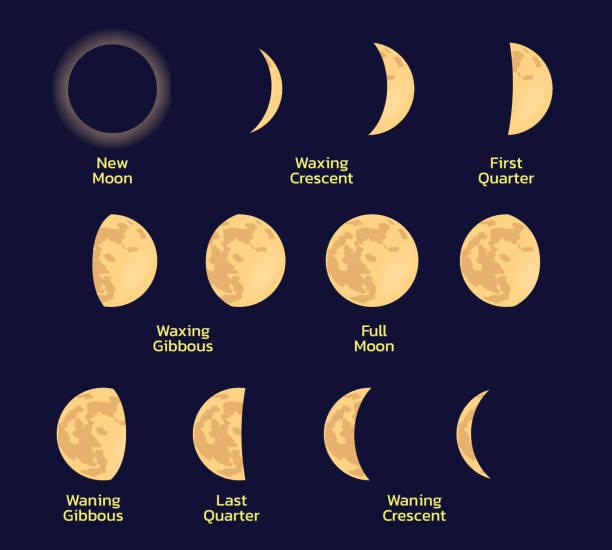 illustrazioni stock, clip art, cartoni animati e icone di tendenza di vettore luce ombra fasi lunari - luna gibbosa