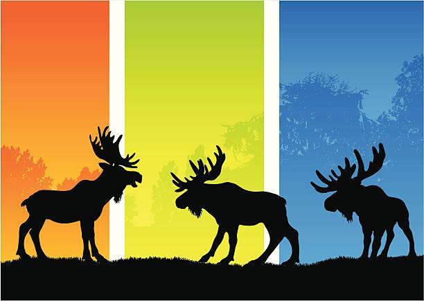 Moose silhouettes in a seasonal landscape Moose silhouettes in an orange, green and blue seasonal landscape. elk stock illustrations