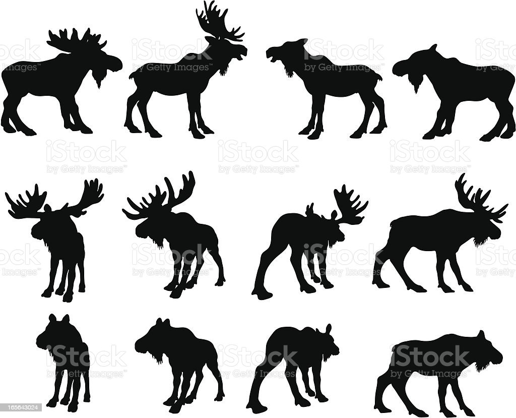 Moose Silhouettes (bull and cow)