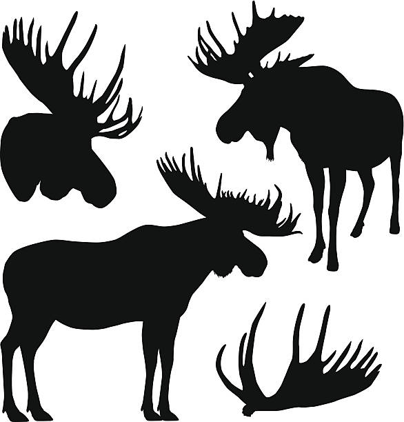 moose silhouettes - moose stock illustrations