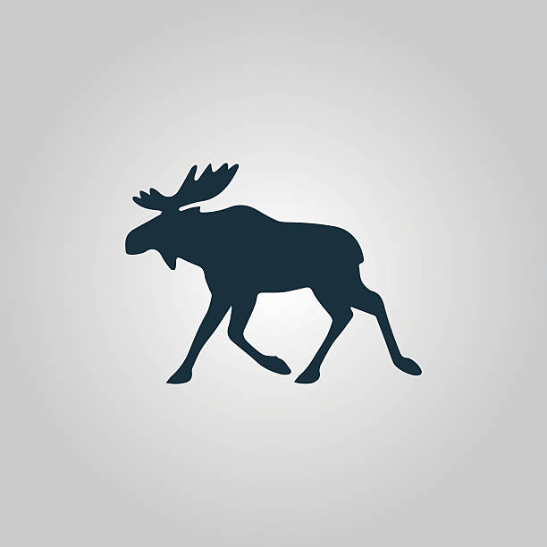 moose vector illustration Moose. Flat web icon or sign isolated on grey background. Collection modern trend concept design style vector illustration symbol elk stock illustrations