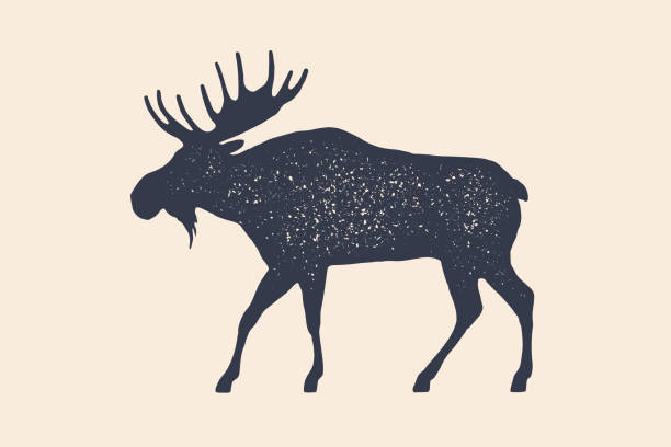 Moose, wild deer. Concept design of farm animals Moose, wild deer. Concept design of farm animals - Moose side view profile. Isolated black silhouette moose or wild deer on white background. Vintage retro print, poster, icon. Vector Illustration red deer animal stock illustrations