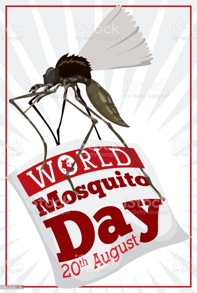 Moquito Flying and Carring a Sign for World Mosquito Day vector art illustration