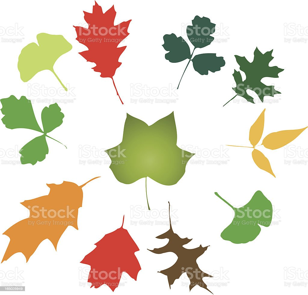 More Leaves: Outdoor Medley! (vector illustrations) royalty-free stock vector art