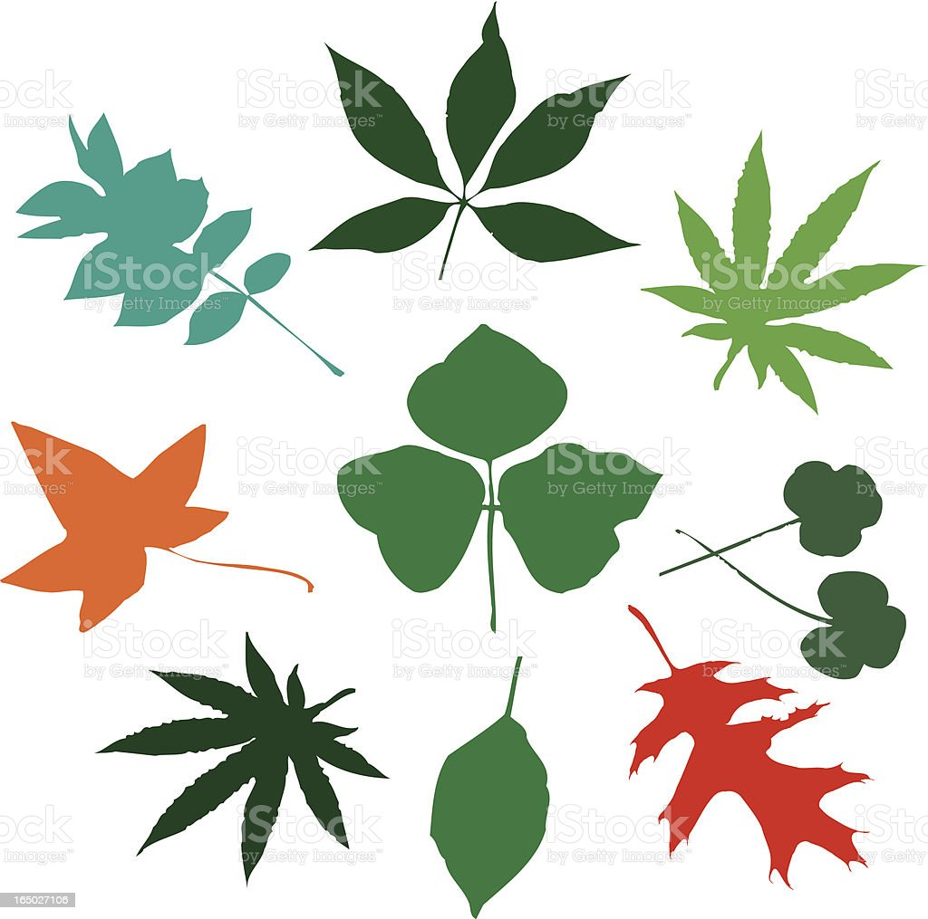 More Leaves: Very Wild Variety!!! (vector illustrations) royalty-free stock vector art
