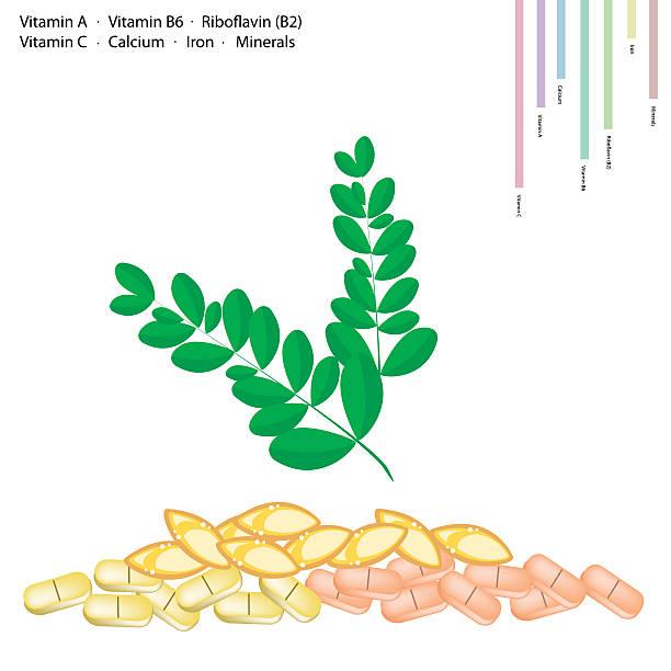 moringa blätter mit vitamin a, b6, b2 und c - wunderbaum stock-grafiken, -clipart, -cartoons und -symbole