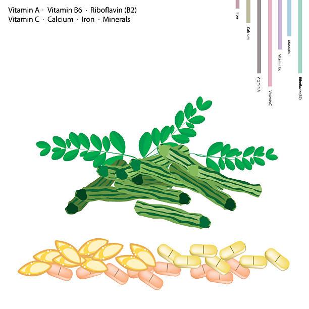 moringa-pods mit vitamin a, b6, b2 und c - wunderbaum stock-grafiken, -clipart, -cartoons und -symbole