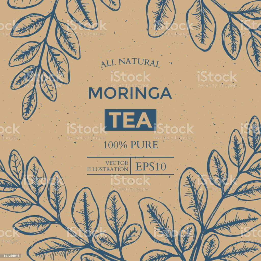 moringa tea package design template with hand drawn leaves vector