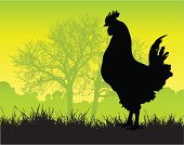 A hen in the morning on a beautiful country farm.