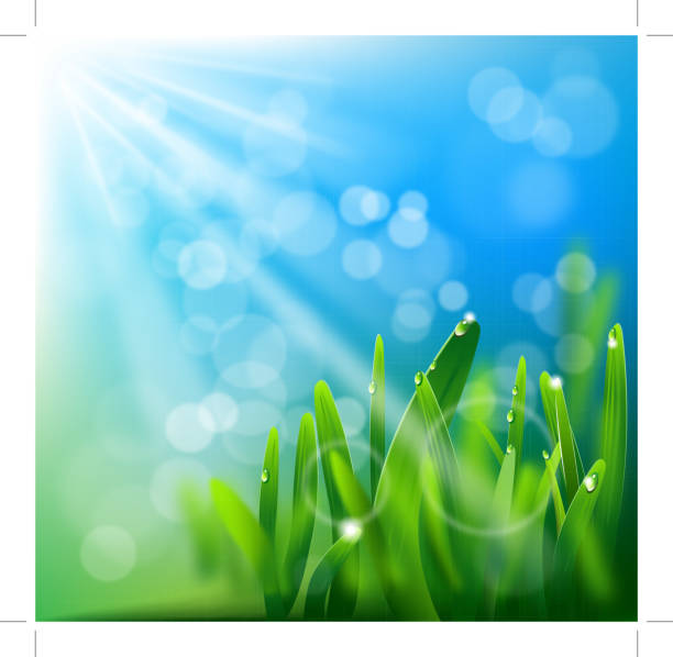 stockillustraties, clipart, cartoons en iconen met morning dew - grasspriet