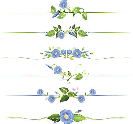 Morning Glory Flowers and Vines Floral Dividers Illustration