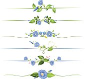Morning Glory page dividers. Morning Glory Flowers and Vines Floral Dividers Illustration.  Set of six page dividers.  Each divider is horizontal and contains morning glory flowers and green leaves.