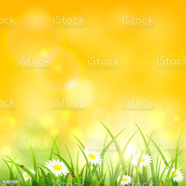 Morning natural background with grass vector id928570082?b=1&k=6&m=928570082&s=612x612&h=q2qp2cpw0 ahclhpe0hooyb6pg7zngqn4th57kihbmc=