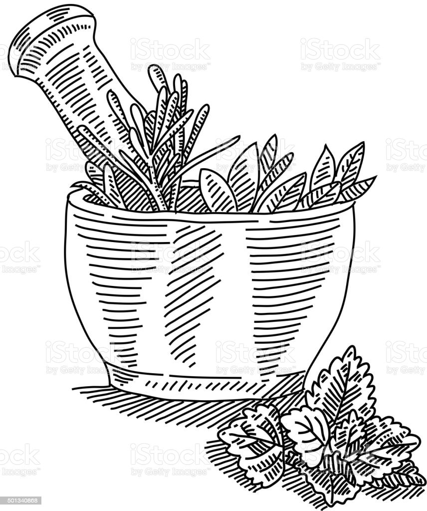 Mortar With Herbals Drawing Stock Vector Art & More Images of ...