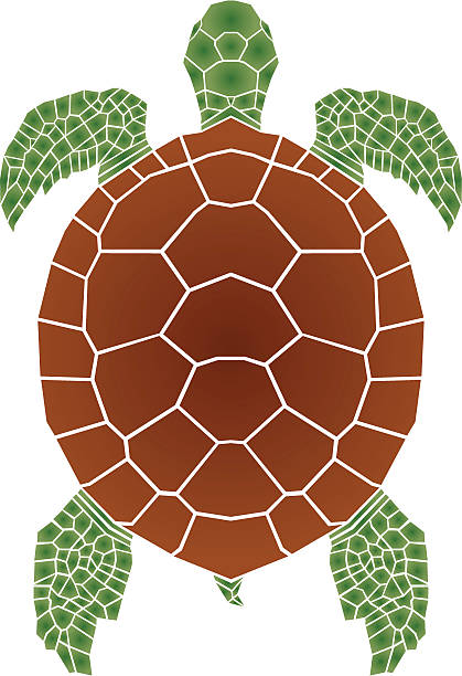 Best Turtle Shell Illustrations, Royalty-Free Vector ...