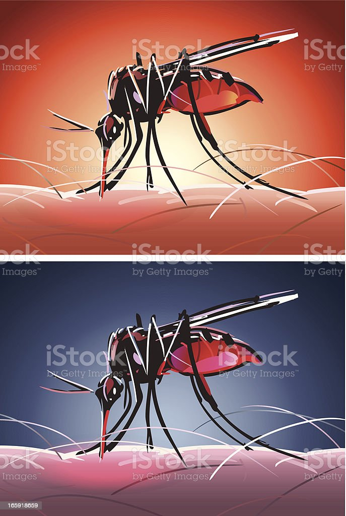 Mosquito Bites Day and Night vector art illustration