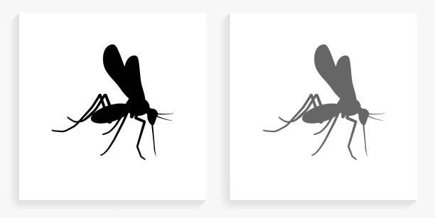 illustrazioni stock, clip art, cartoni animati e icone di tendenza di mosquito black and white square icon - zanzare